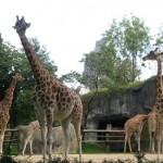 Zoo de París